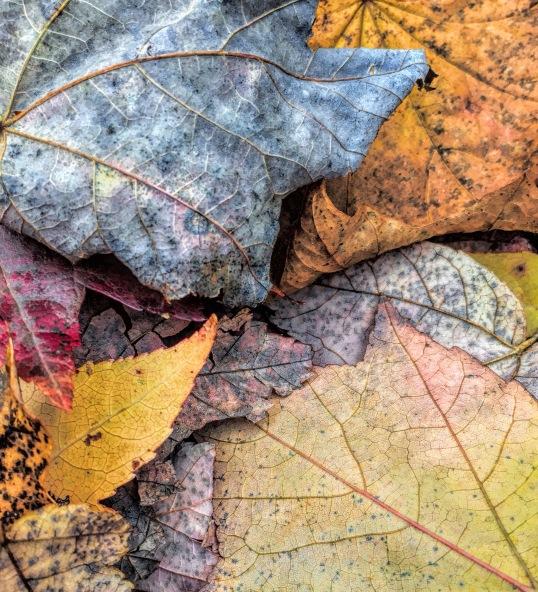 leaf-pile-up